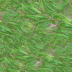 grass-texture (19)