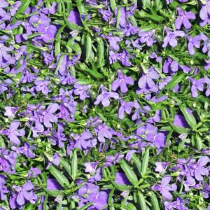 grass-texture (26)
