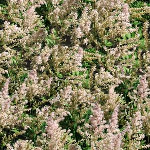 grass-texture (28)