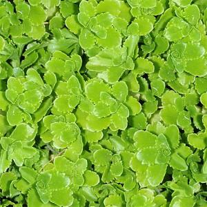 grass-texture (31)