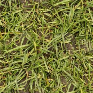 grass-texture (37)