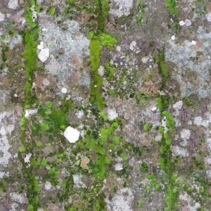grass-texture (50)