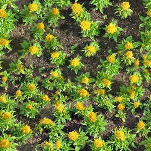 grass-texture (6)