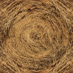 grass-texture (64)
