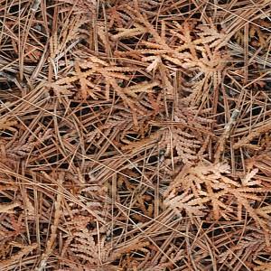 grass-texture (69)