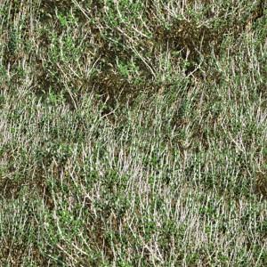 grass-texture (78)
