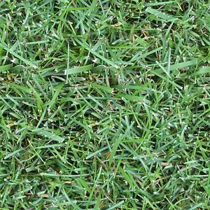 grass-texture (84)