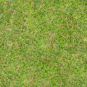 grass-texture (94)