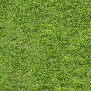 grass-texture (95)