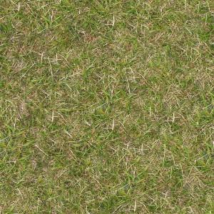 grass-texture (97)