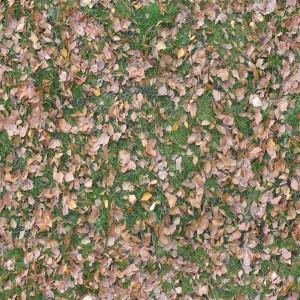 ground-texture (105)