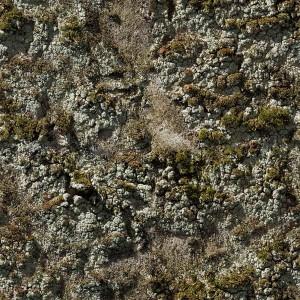 ground-texture (133)