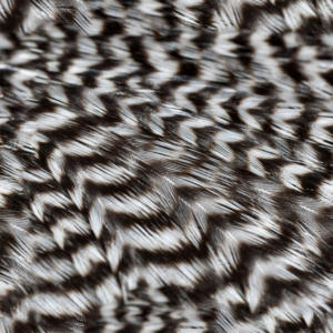 feather-texture_(27)