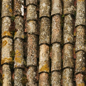 roof-texture (53)