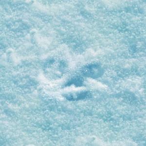 snow-texture (8)